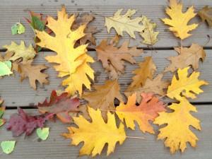 podzimni-vyprodej