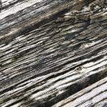 dreveny-masiv-bez-udrzby-8