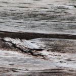 dreveny-masiv-bez-udrzby-9